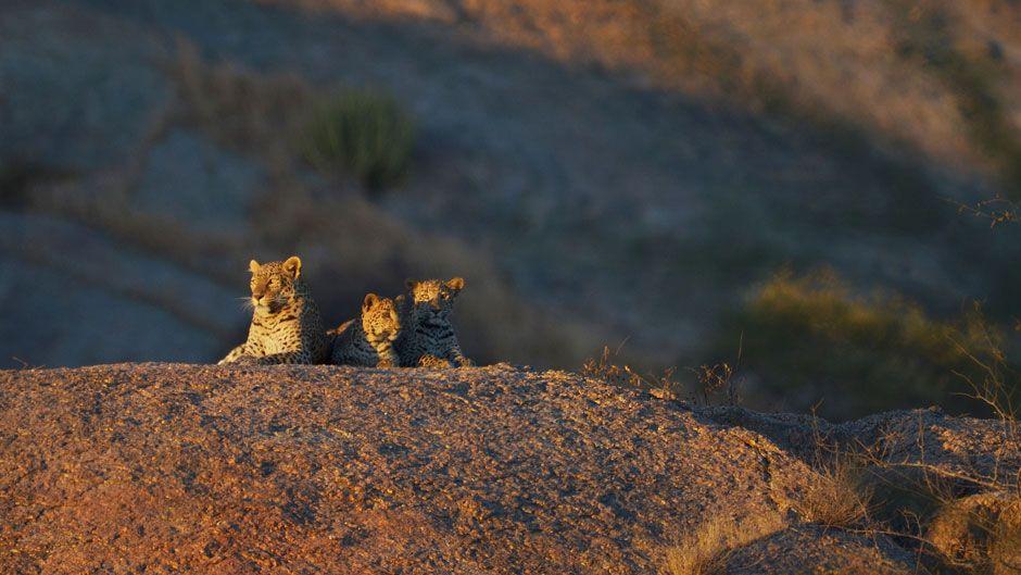 Jawai-Leopard-Camp-3-leopar_940_529_80_s_c1
